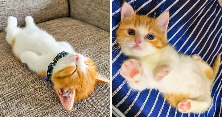 Ezek a fotók bizonyítják, hogy macskák nélkül az élet merő unalom lenne