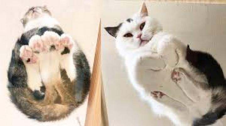 21 macska, amit minél tovább nézünk, annál jobb lesz a kedvünk