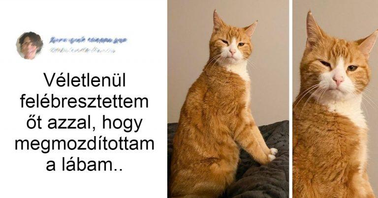 17 pimasz macska, aki megmutatta a gazdájának, hogy ki a főnök a házban