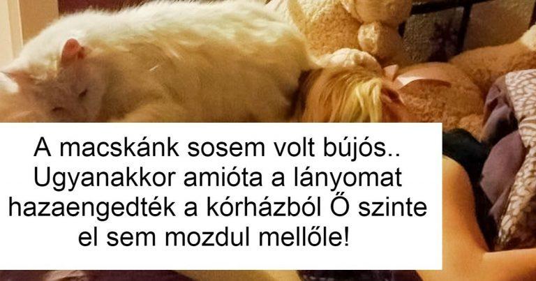 14 fotó, ami bizonyítja, hogy a macskák is legalább annyira hűségesek, mint a kutyák