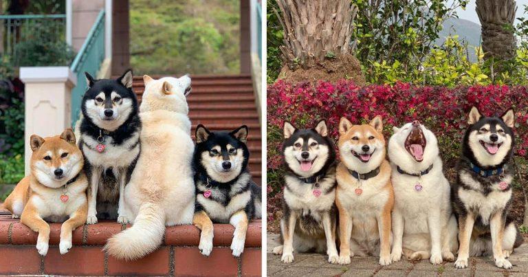 Az egész internet egy kutyán nevet, aki nem tud viselkedni fényképezés közben és minden képet tönkretesz