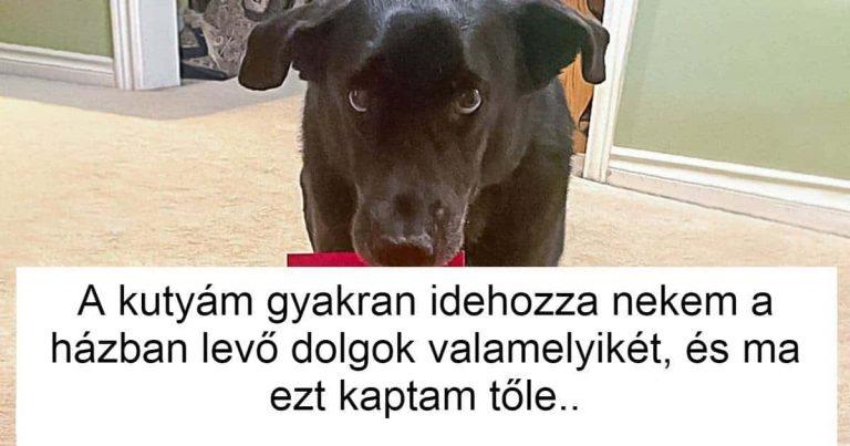 18 kutyus, kinek furcsa szokásai egyszerre meglepnek és megmosolyogtatnak