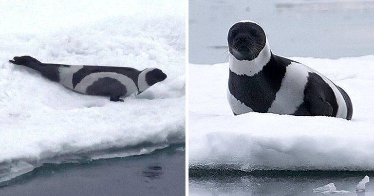 15 fekete-fehér állat, amelyek olyan lenyűgözőek, hogy elállt a lélegzetünk