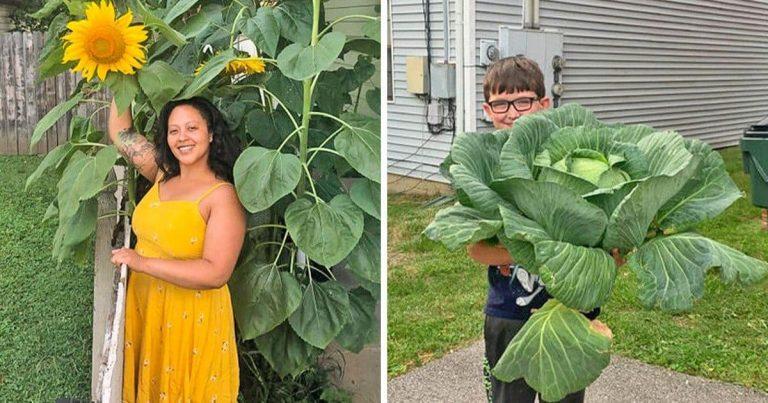 25 gigantukus eset, amikor a kertmániások nem kis túlzásba estek