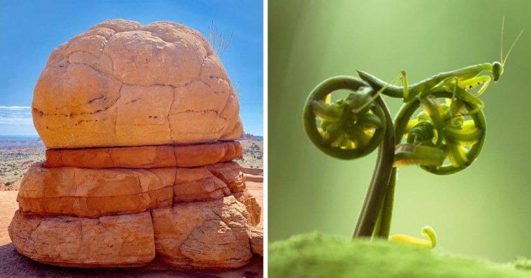 20 fotó, ami bizonyítja, hogy a természet még mindig képes meglepetéseket okozni